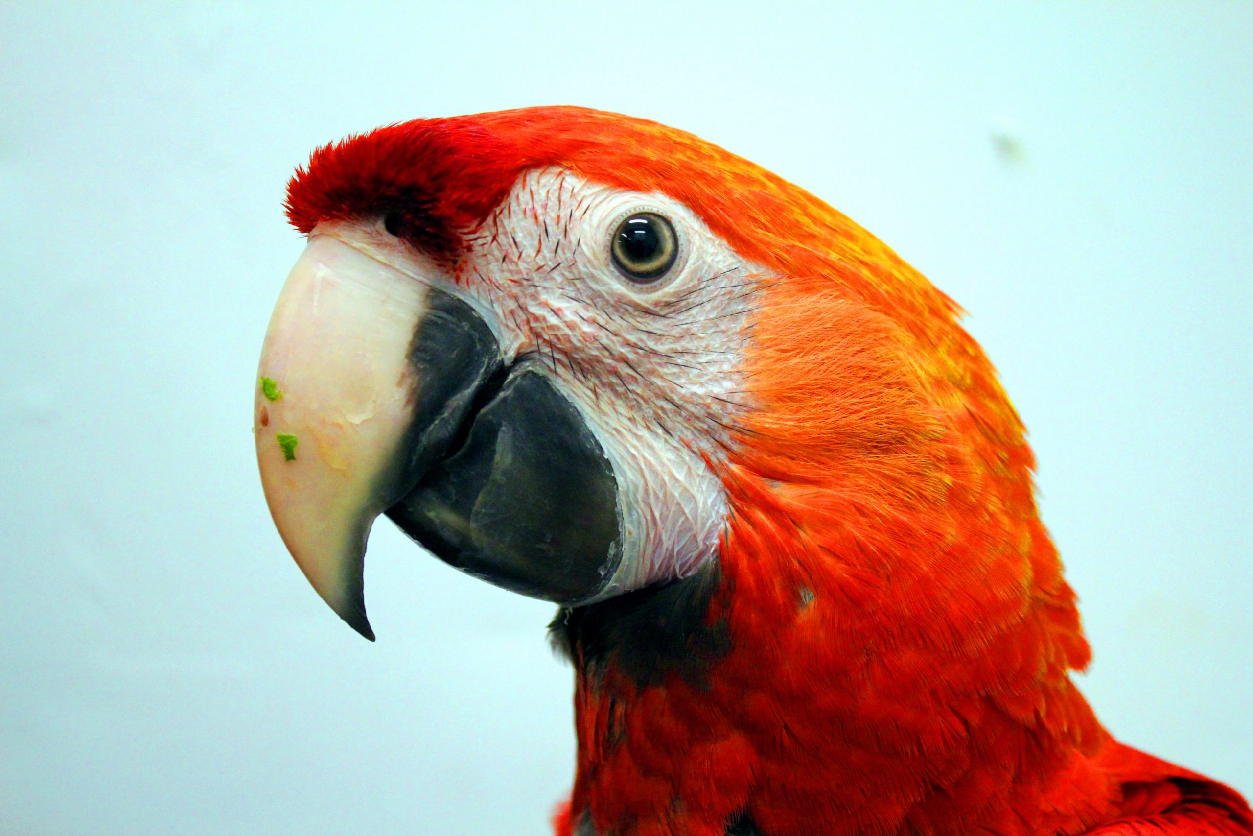 The Stunning & Colorful Macaw Parrot