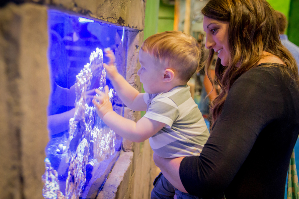 At SeaQuest, we have tons of amazing animals to see - like gorgeous fish